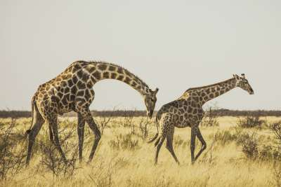 Have incredible wildlife experience in Etosha National Park, in Namibia