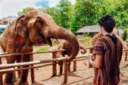 Meet elephants in Chiang Mai!