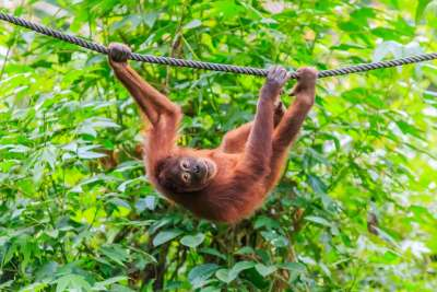 Meet the locals in Borneo!